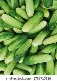 healthy green cucumber at market