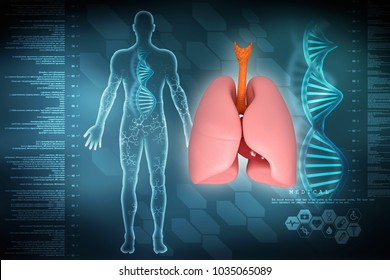 Healthy Human Lungs 3d illustration