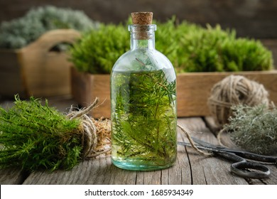 Healthy infusion of moss, lichen and juniper. Herbal medicine.