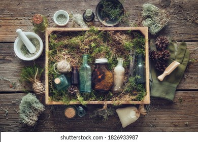 Healthy infusion and oil bottles, wooden box of healthy moss, lichen, moss, juniper, pine cones on wooden table. Alternative medicine.