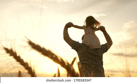 healthy kid and dad travel on wheat field. free daughter and father play in nature. happy family and childhood concept. little daughter on father's shoulders. Slow motion.