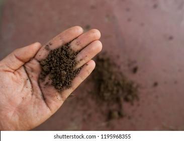 Healthy loam soil