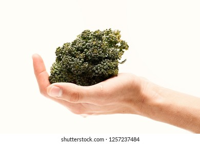 Healthy nutrition and vegan diet concept. Broccoli in female palm isolated on white background. Green vegetable in close up. Hand holds bunch of wholesome broccoli cabbage, selective focus.