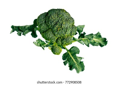 Healthy organic vegetarian diet raw Broccoli. Isolated on white