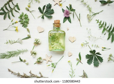 healthy plants, bottle of tincture or infusion. Top view. Herbal medicine.