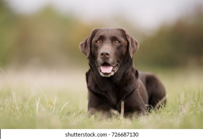 Healthy purebred dog photographed outdoors in the nature on a sunny day.