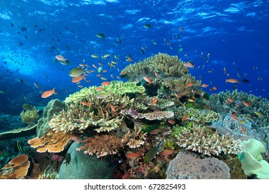 Healthy reef and colorful fishes