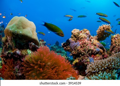 Healthy reef with fish