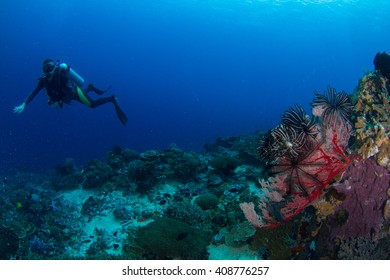 Healthy reef with silhouette of a male diver.