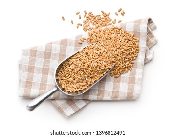 Healthy spelt grains in scoop isolated on white background.