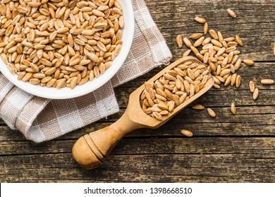 Healthy spelt grains in wooden scoop.
