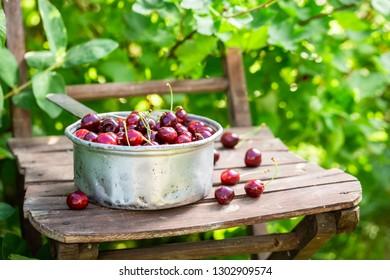 Healthy sweet cherries on the white metal bowl