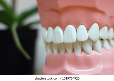 Healthy teeth in dummy jaw - medical equipment in the dental office