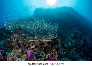 Healthy tropical coal reef with variety of different kind of corals and school of fishes