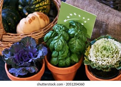 Healthy vegetarian ingredients for cooking. Various clean vegetables, herbs in pots. Products from the market without plastic. Basilic and cabbage. High quality photo
