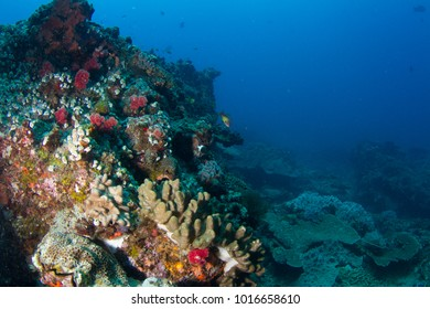 Healthy and Vibrant Coral Reef