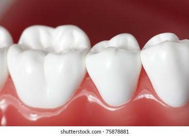 Healthy white human teeth close up. Dentistry.