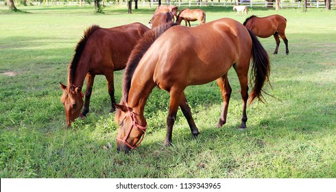 Healty horses eating grasses in the green field