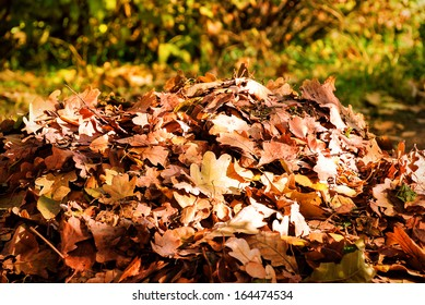 Heap autumn leaves in the garden. Autumn season
