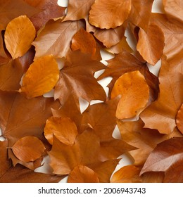 Heap of brown fallen leaves. Flat lay, top view. Autumn background.