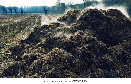 Heap of cow-dung in the Piedmont countryside