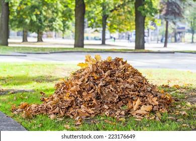 Heap of dry oak leaves in autumn time