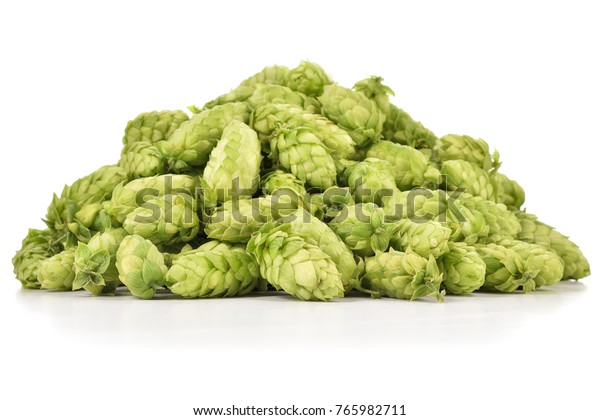 Heap of fresh green hops (Humulus lupulus) isolated on white background. Pile of hops, ingredient for brewery industry.