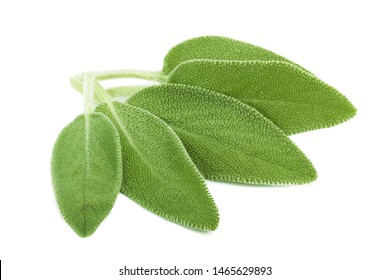 heap of fresh green sage isolated on white background
