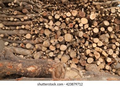 Heap of freshly cut firewood used as fuel in rural India