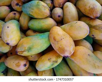 Heap of Freshly riped pakistani mangoes