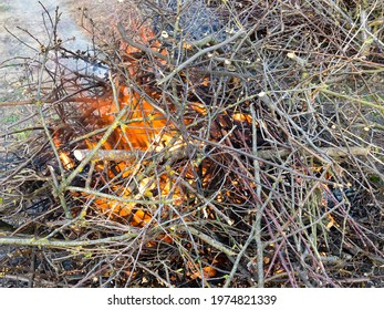 heap of freshly sawn branches are burning outdoors