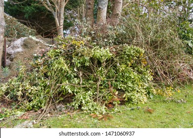 Heap of garden waste after trimming trees and hedges during autumn