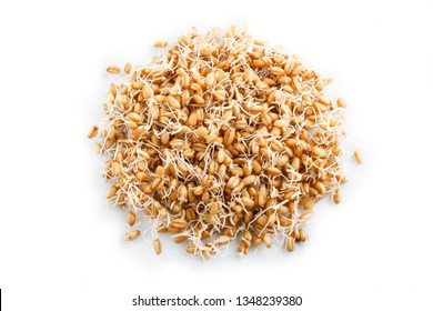 Heap of germinated wheat isolated on white background, top view, close up.