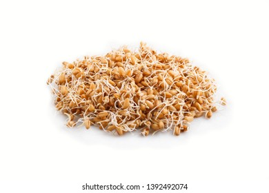 Heap of germinated wheat isolated on white background, side view, close up.