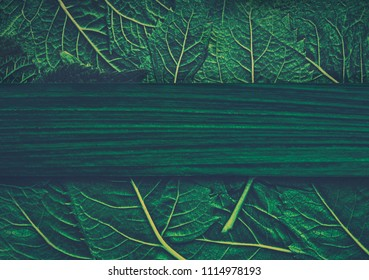 Heap of green fresh stinging nettle leaves with copy space. Can use as banner.