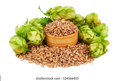 heap of hop and wheat on white background