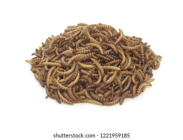 Heap of meal worms larvae for feeding pets, birds reptiles or fish isolated on white background