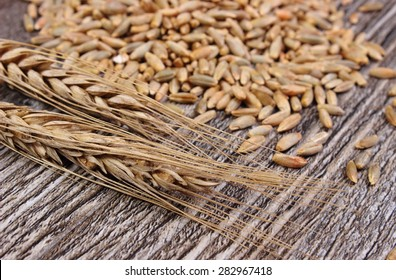 Heap of organic whole rye grain and ears of rye lying on wooden background