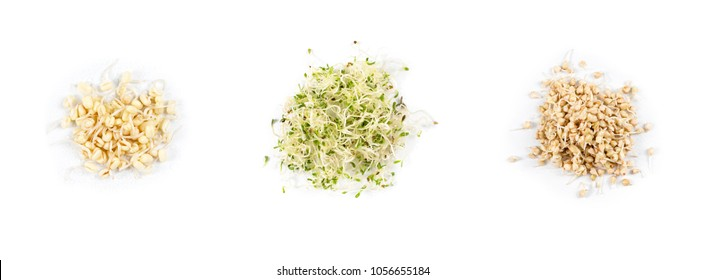 Heap of pea sprouts, sprouted alfalfa seeds and germinated buckwheat, micro greens on white background. Symbol of health and vitamins from nature. Microgreens closeup.