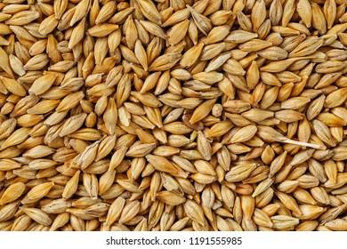 heap of pearl barley grains, vegetarian food