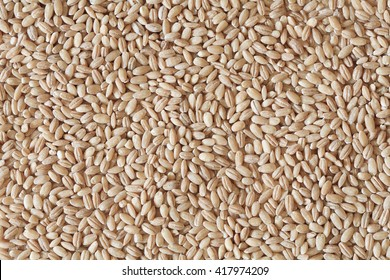 heap of pearl barley grains, vegetarian food