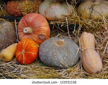 Heap of pumpkin on straw