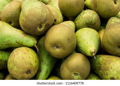 Heap of Ripe Organic Green and Brown Conference Pears at Farmers Market. Bright Vibrant Vivid Colors. Vitamins Superfoods Healthy Diet Harvest Concept. Close up on Details. Beautiful Food Poster