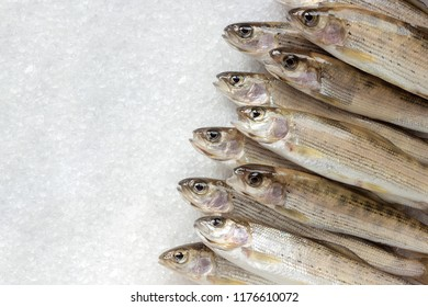 Heap Siberian river fish grayling close-up on white large crystals salt background, Copy space, top view