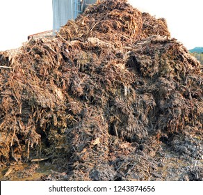 heap of smelly manure to spread on the field to make it very fertile