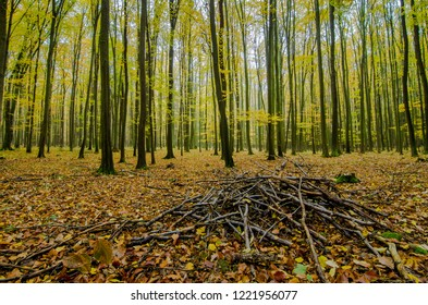 The heap of sticks in forest in Krivoklatsko area during autumn.