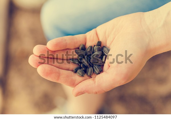 heap of sunflower seeds on a hand. Retro toned