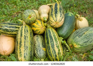 A heap of the vegetable marrows on grass.