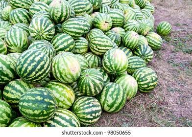 Heap of watermelon.