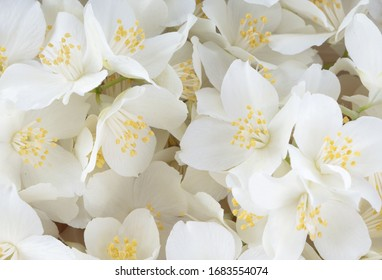 heap of white jasmine flowers background